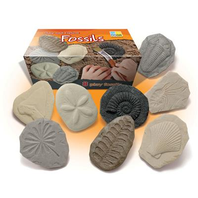 Play and Explore Fossils