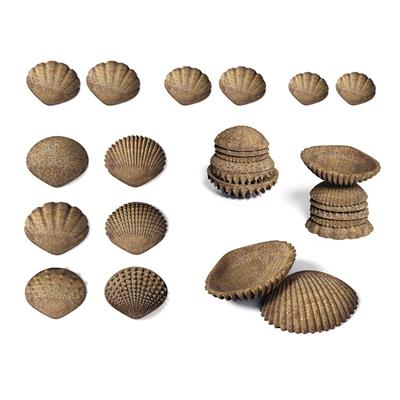 Tactile Shells, 36 Pieces